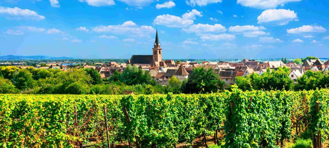 Découverte vignoble d'Alsace